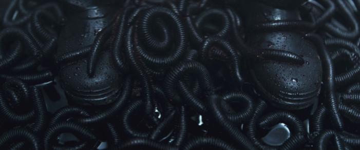Mandy - LSD Worms