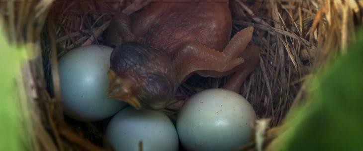 Father Son Holy Gore - Vivarium - Baby Bird
